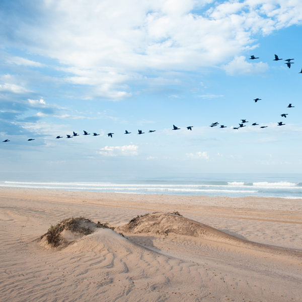 Open Spaces, Endless Beaches And Red Desert Dunes