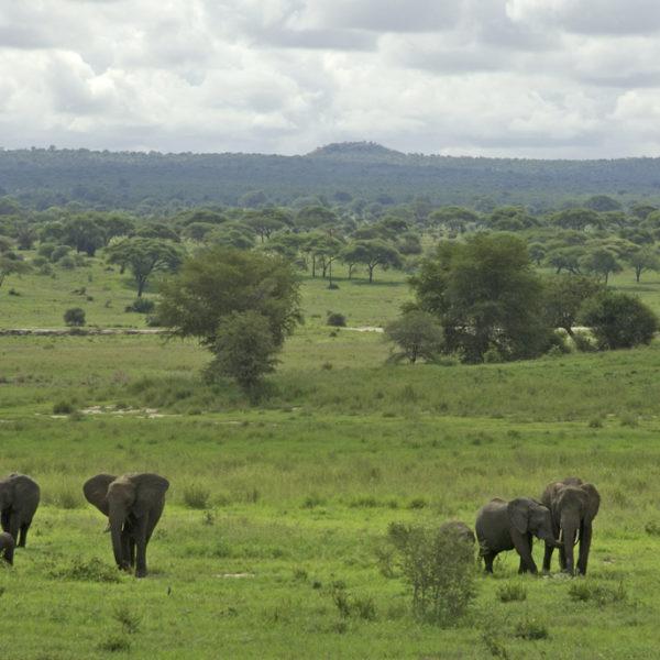 Unforgettable Safari Tour