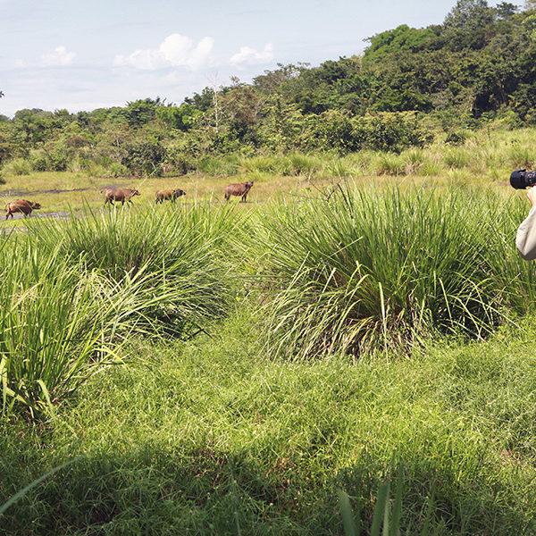 Stunning Wildlife Experiences In Kenya And Tanzania